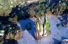 Saltwater Tombstone