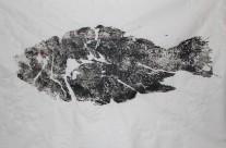 Tautog Gyotaku