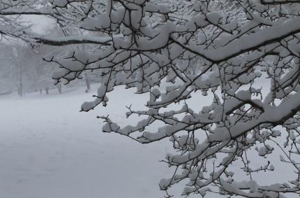 Snowfall in Wilcox Park