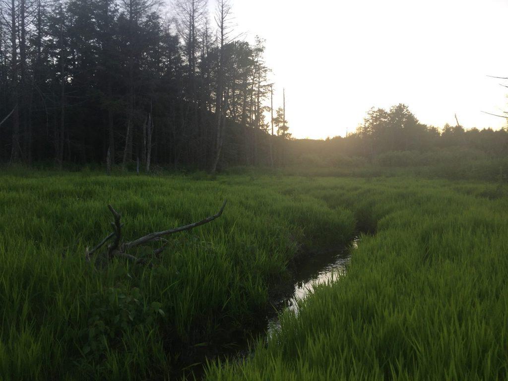 Beaver Pond Remains